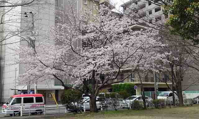 「 ポスト de でり 」 横浜野菜のお弁当 郵便局でお弁当!?